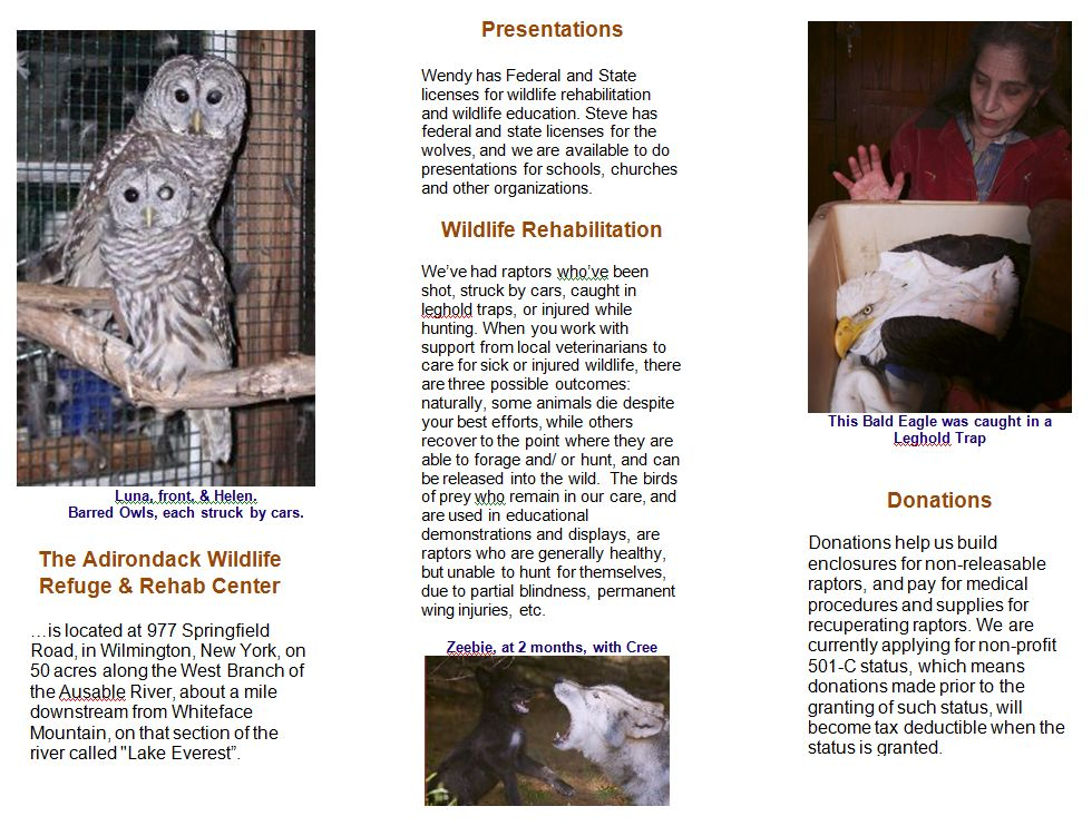 Adirondack Wildlife Brochure inside
