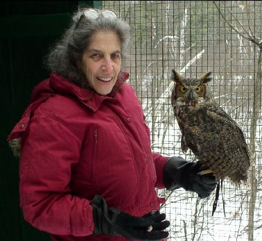 """Artemis"" -Great Horned Owl"