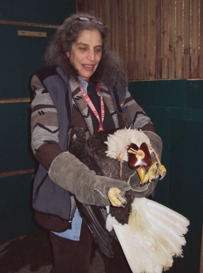 Wendy working with Bald Eagle at West Sound Wildlife Rehab