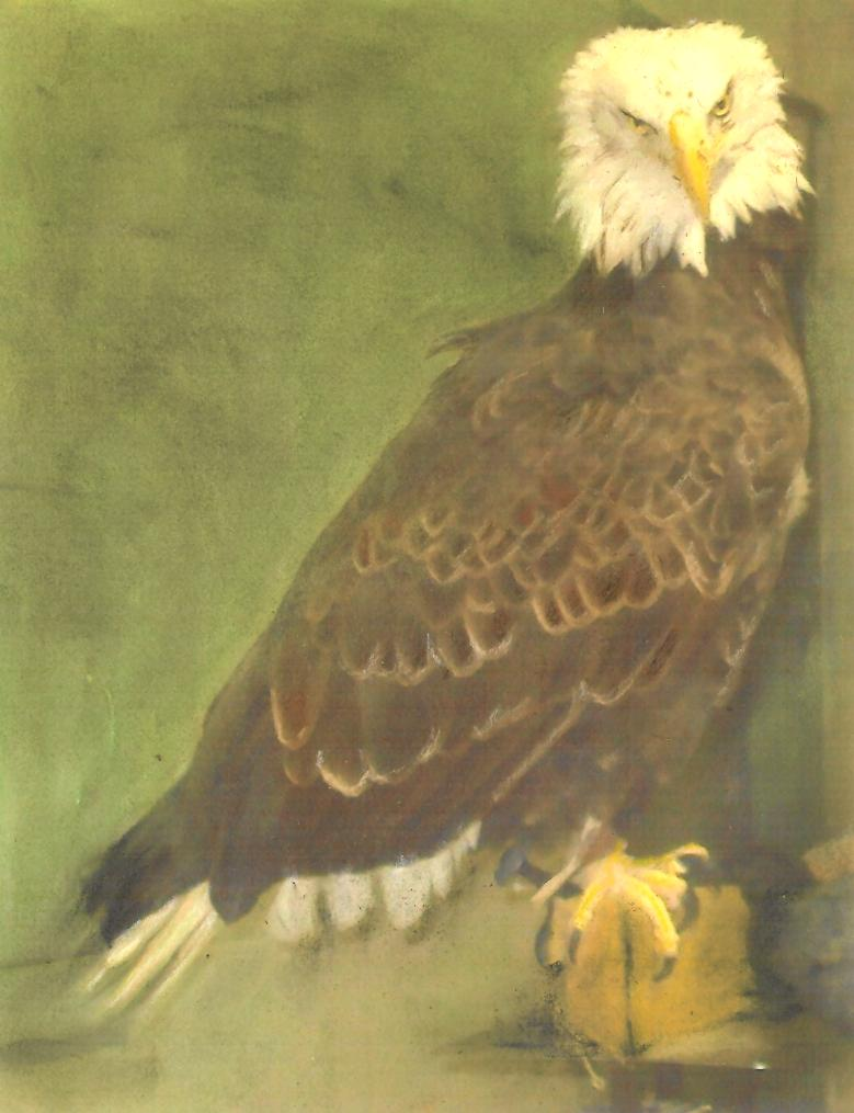 Bald Eagle pastel by Wendy Hall