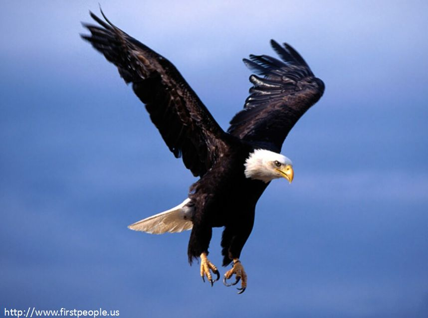 "Bald Eagle: ""Fearsome Flight"""