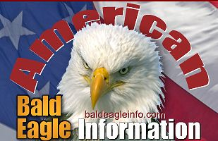 Bald Eagle Information web site