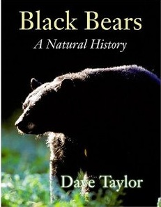 Black Bear - Natural History by dave Taylor