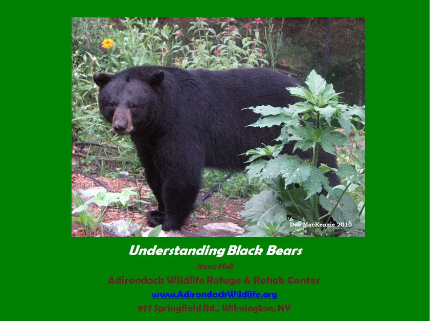Black Bear power point presentation