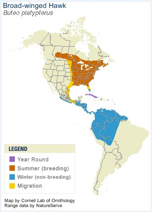 Broad-Winged Hawk Range
