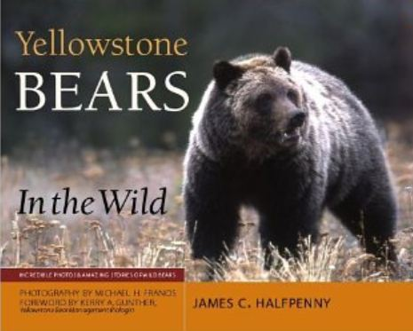 James Halfpenny, Yellowstone Beras in the Wild5