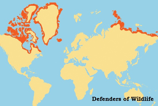 Polar Bear Range from Defenders of Wildlife