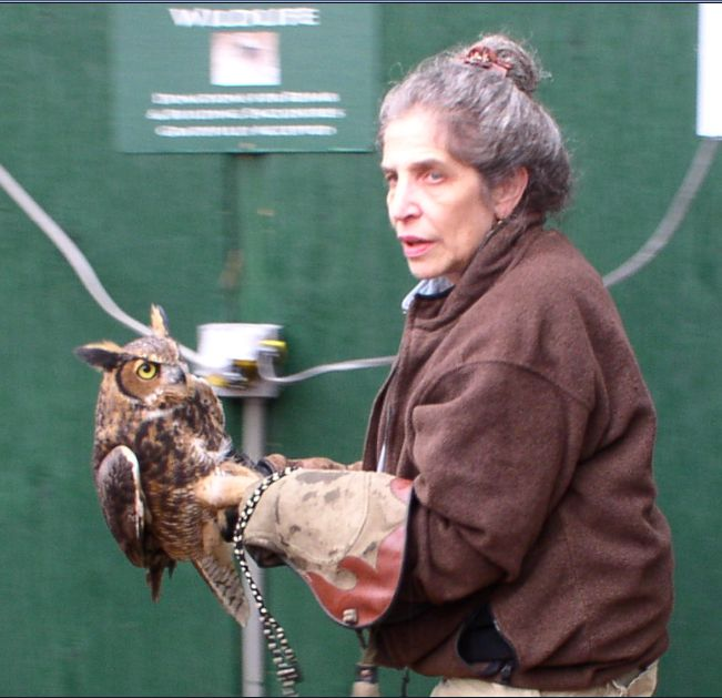Immature Great Horned Owl Release
