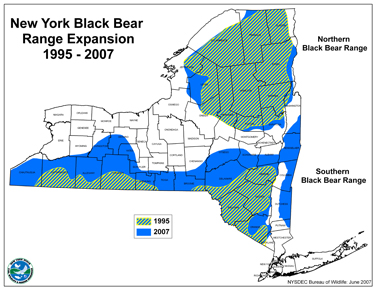 Black Bear - expanding range in New York State