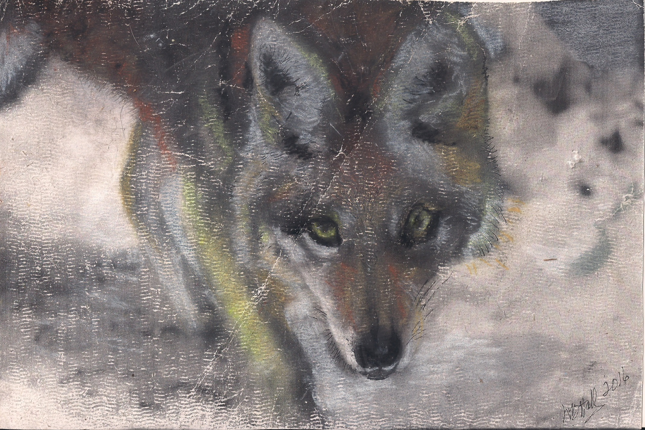 Coyote Pastel by Wendy