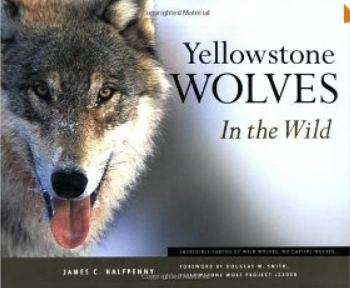 James Halfpenny: Yellowstone Wolves in the Wild